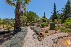 4.500m2 garden with palm trees.